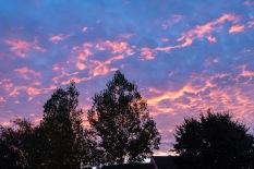 West Wick Sunrise-Wordpress-3535