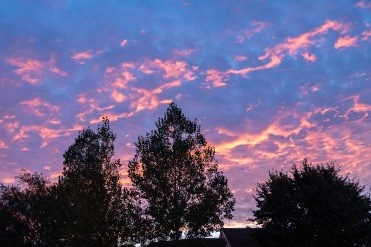West Wick Sunrise-Wordpress-3535
