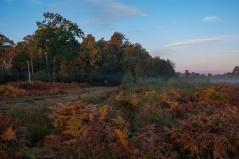 Westhay sunrise-3374
