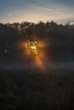 Westhay sunrise-3378