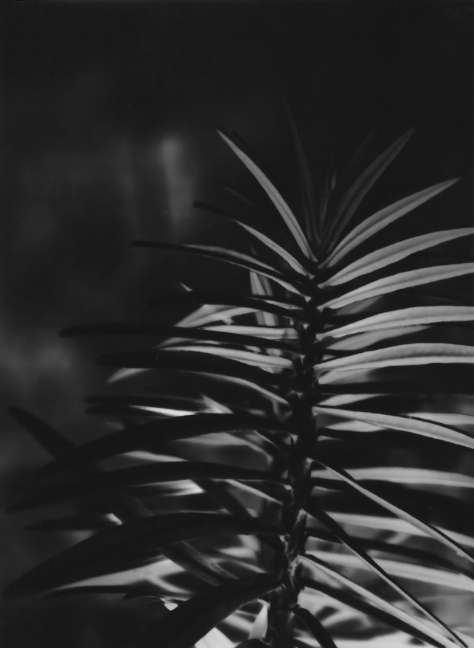 Euphorbia_Photopaper_HalfPlate