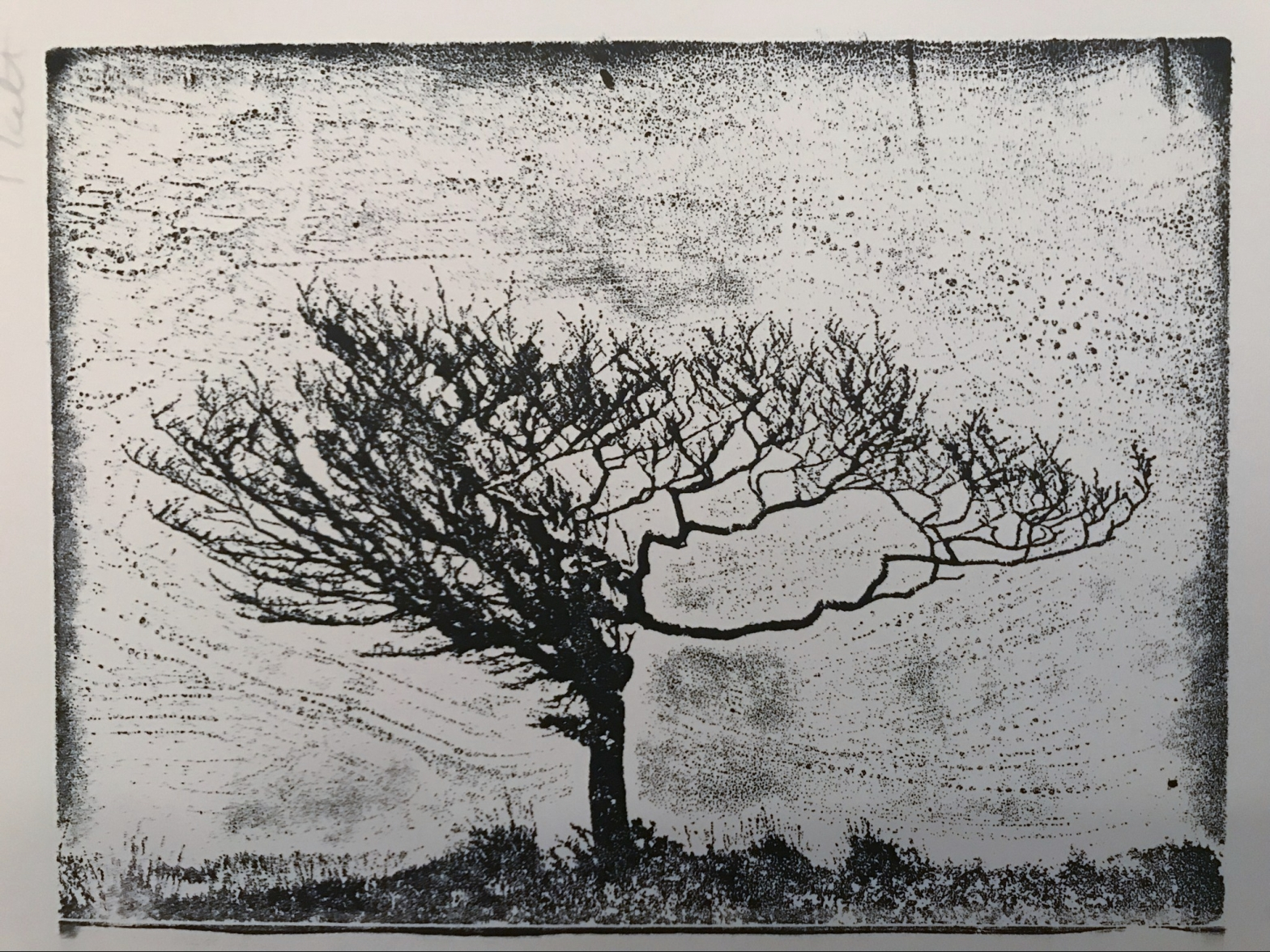 Aluminium Etching of a weathered Exmoor tree