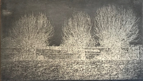 etched-plate-willows_jan2019-7988