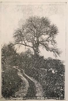 Kettlewell Tree