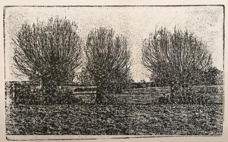Greylake - Willows