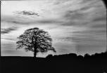 mendipinwinter-trees-thorntonpickard-inv-wp-