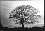 mendipinwinter-trees-thorntonpickard-inv-wp-2