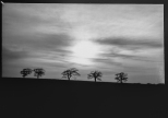 mendipinwinter-trees-thorntonpickard-inv-wp-3