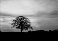 mendipinwinter-trees-thorntonpickard-inv-wp-4