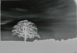 mendipinwinter-trees-thorntonpickard-wp-1