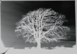 mendipinwinter-trees-thorntonpickard-wp-2