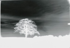 mendipinwinter-trees-thorntonpickard-wp-4