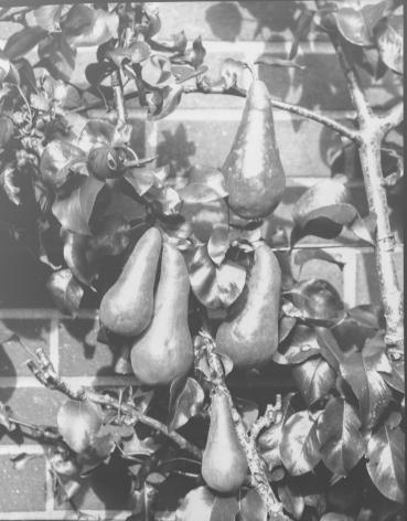 Garden_PsPos_Oct5th2019-Wordpress-3